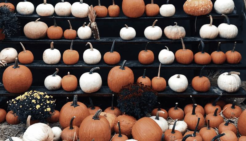 Pumpkins Happy Halloween