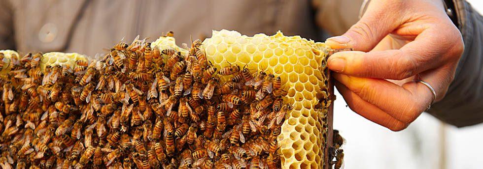 Fairmont Hotels Bee Sustainable