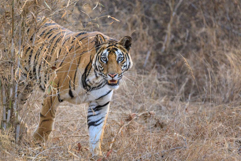 Nomadic Expeditions Photographer's India
